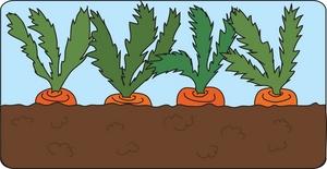 Carrot clipart row Clip Plot (5+) garden Clipart