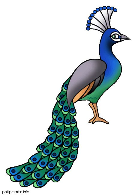 Peacock clipart small And Pinterest Clip Find art