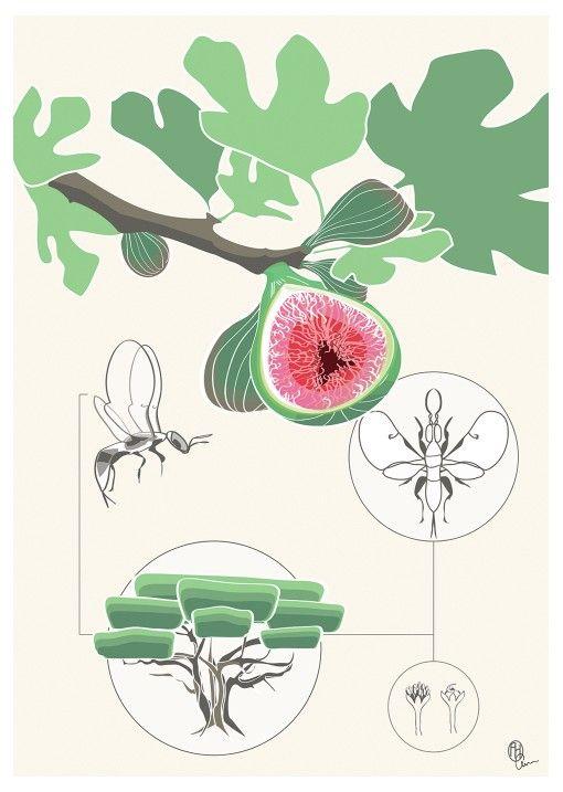 Garden Of Eden clipart malinis #14