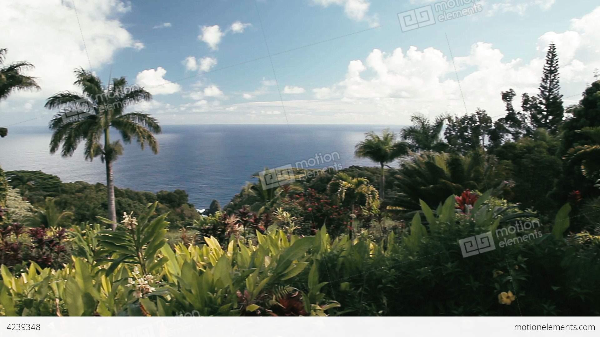 Garden Of Eden clipart maui 1080p Maui Hawaii Garden Video