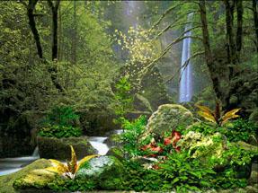 Garden Of Eden clipart real life Collection  clipart of eden