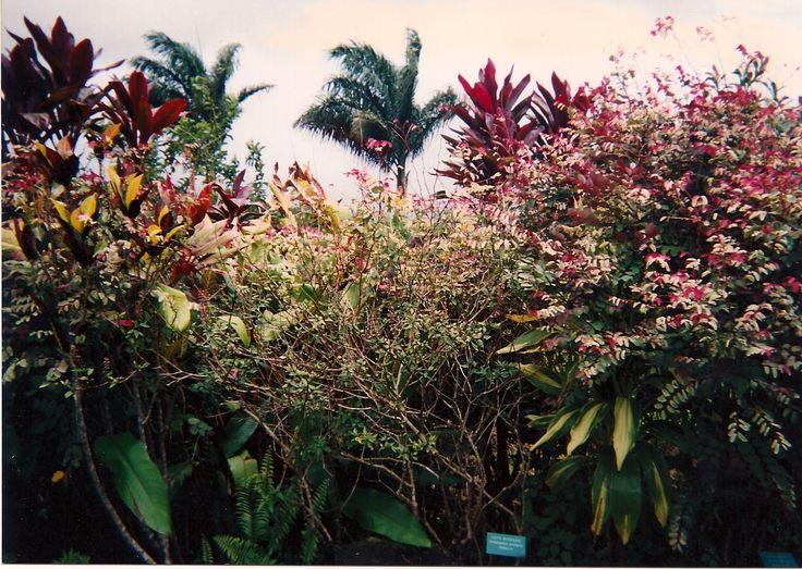 Garden Of Eden clipart taman eden Garden on Eden Eden Garden