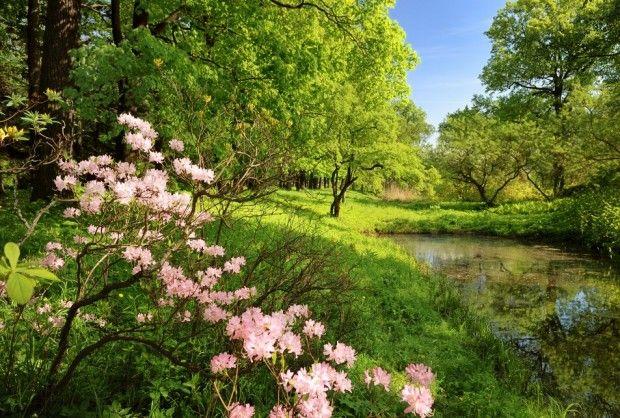 Garden Of Eden clipart taman eden — clipart Restored? Eden Has