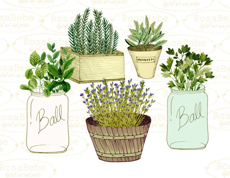 Herbs And Spices clipart different kind Clipart will that wedding Garden