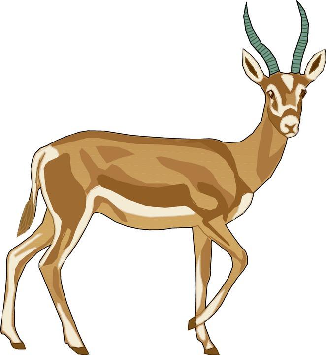 Gazelle clipart Horned Clipart Free Gazelle Gazelle