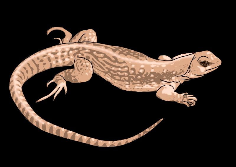 Monitor Lizard clipart newt #7
