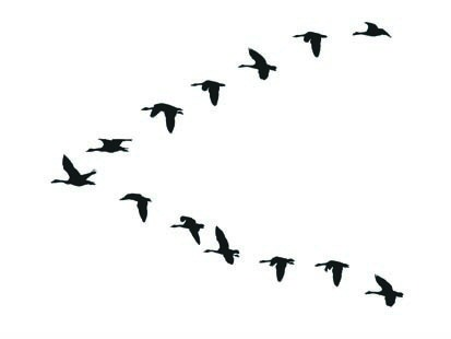 Geese Migration clipart Geese Flying Clipart Clipart formation