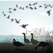Geese Migration clipart Free Migrating shore Art Bird
