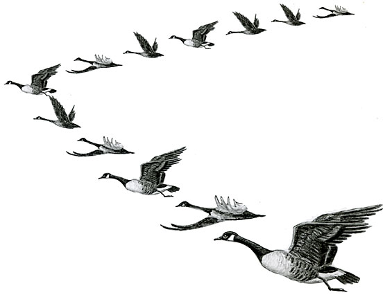 Geese Migration clipart Migration Migration drawings Download Migration