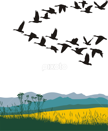 Geese Migration clipart Animals migrating geese by Pixoto