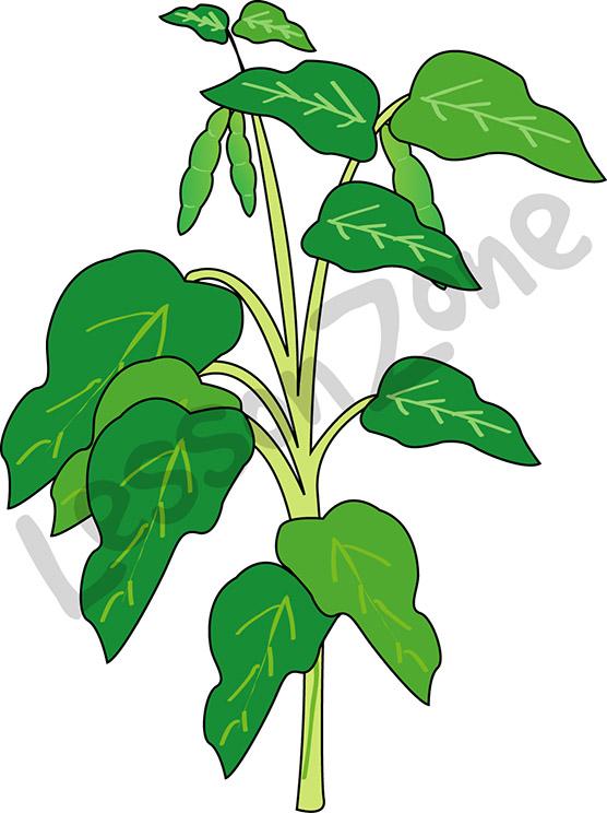 Bean clipart bean plant Plant Beans Plant Clipart green