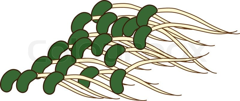 Bean clipart bean sprout Clipart loss (44+) Clipart without