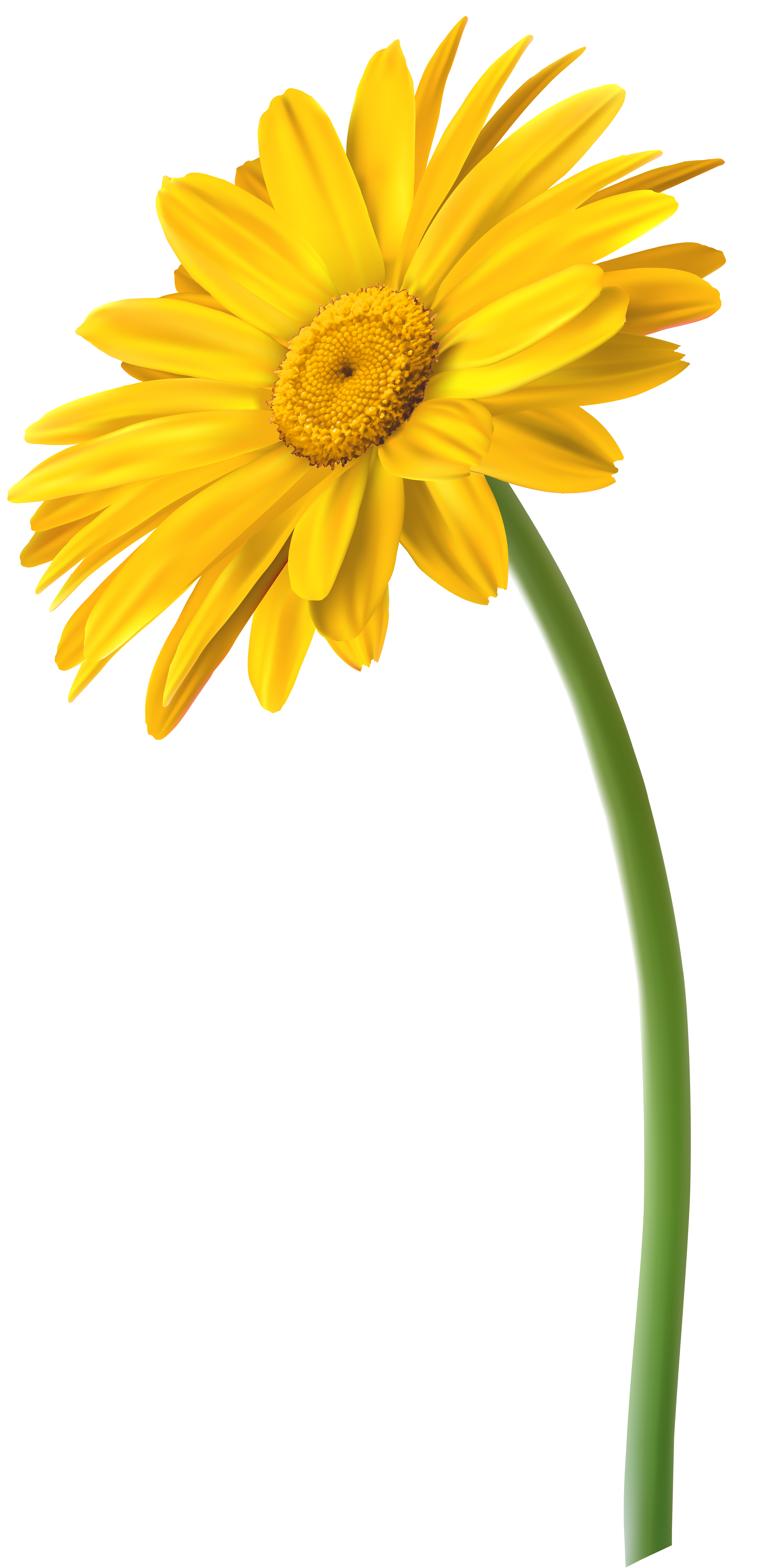 Gerbera clipart sunflower Full Gerbera Clip Gallery Art