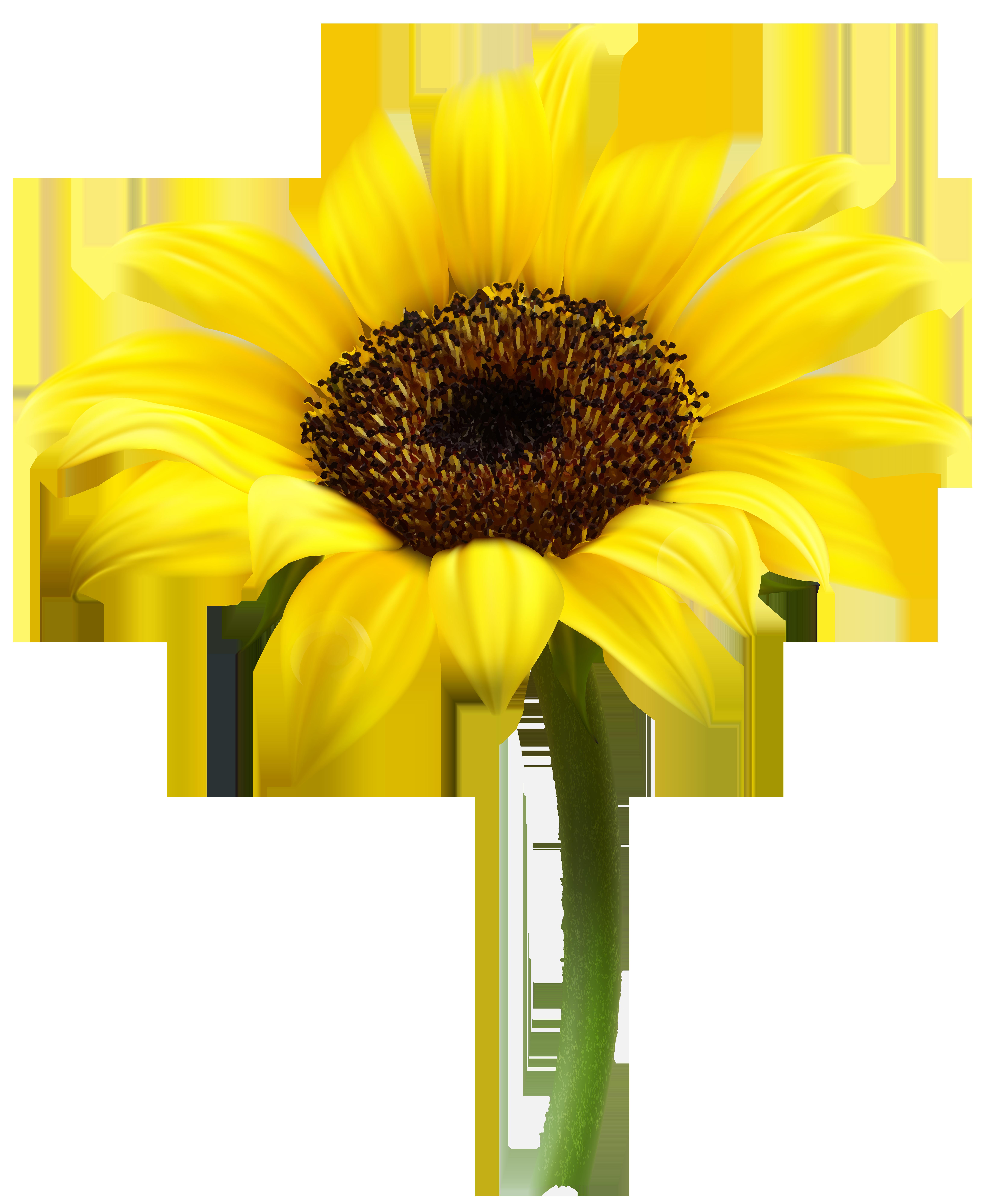Gerbera clipart sunflower Flowers Flower Sunflower Clip Transparent