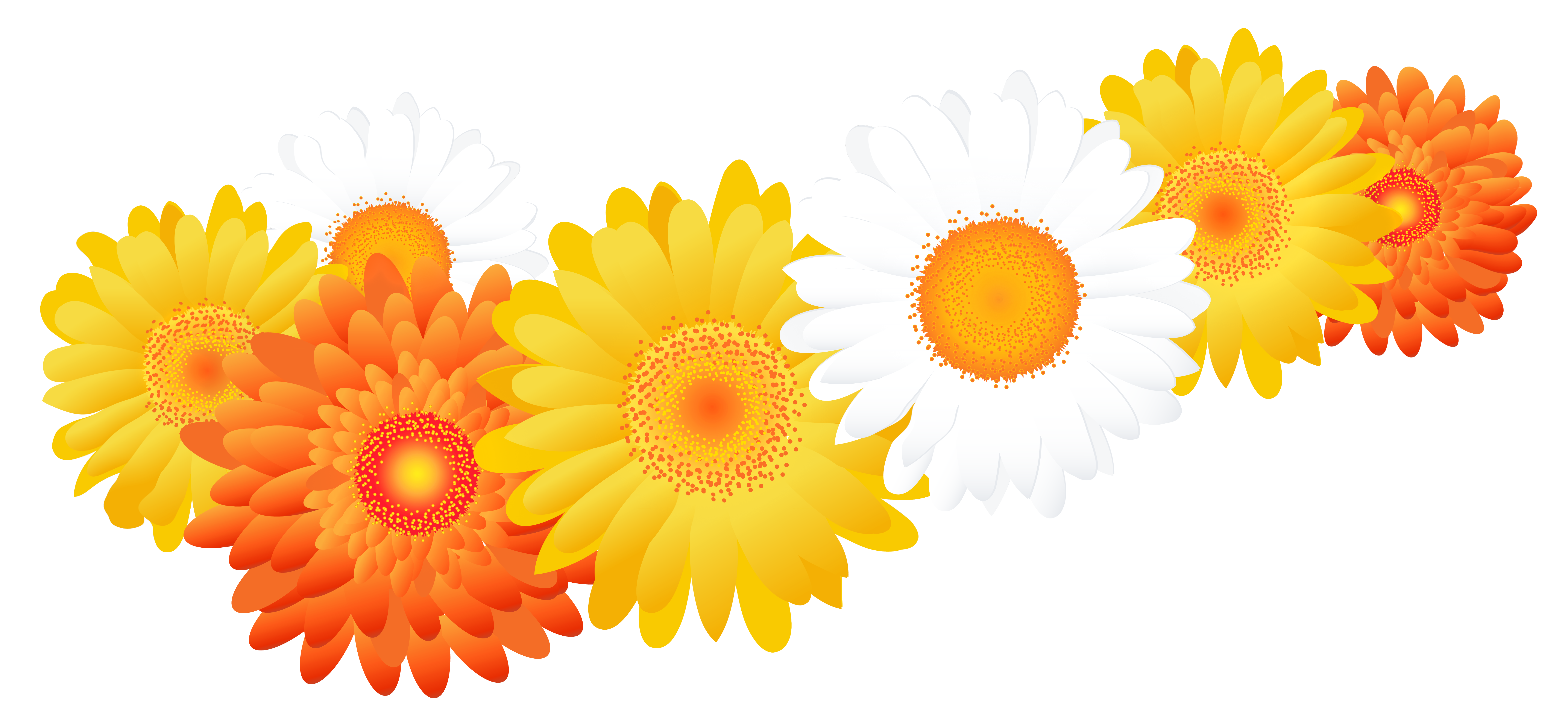 Gerbera clipart sunflower Full with Image High Gallery