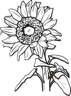 Gerbera clipart sunflower The com clipart Floral Google
