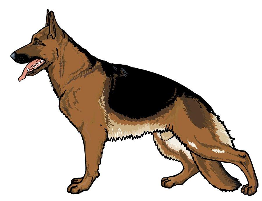 German Pinscher clipart Clipart Inspiration Shepherd Shepherd Cartoon