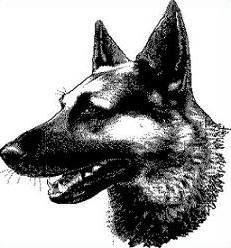 German Shepherd clipart Free Shepherd German Clipart Shepherd
