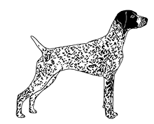 German Shorthaired Pointer clipart ABOUT German collection Shorthaired Pointer;