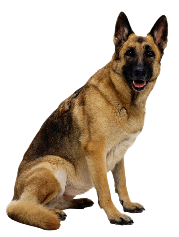 Germany clipart german shepherd puppy PS Pinterest German shepherds Shepherd