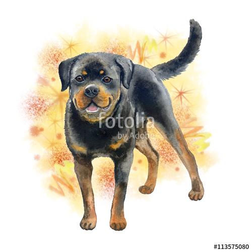 Rottweiler clipart german #2