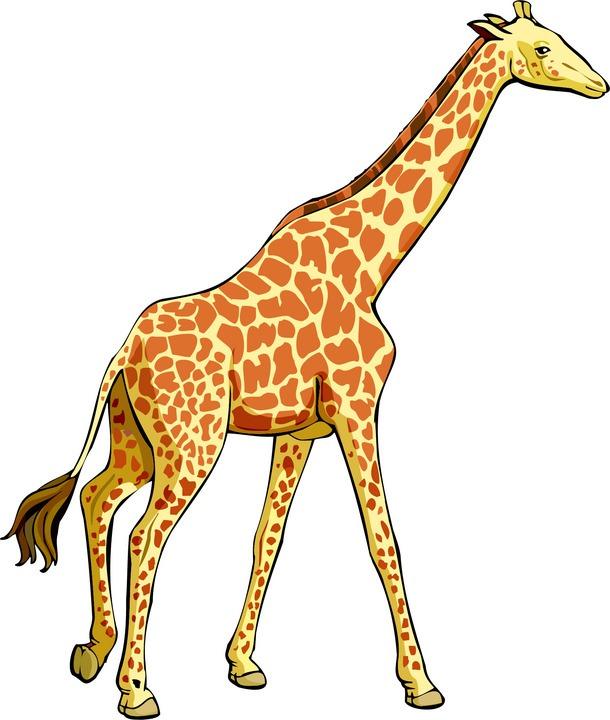 Realistic clipart giraffe #1