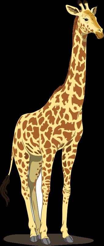 Realistic clipart giraffe #3