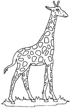 Black & White clipart giraffe And white white and clipart
