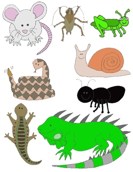 Reptile clipart creepy crawly #11