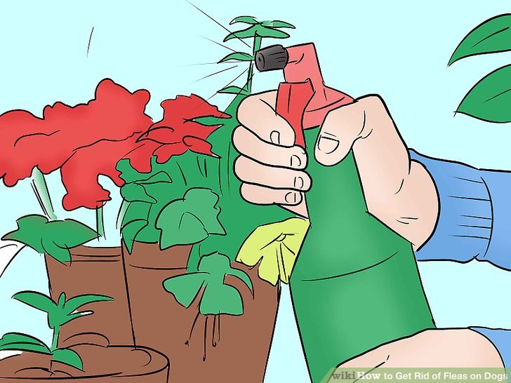 Glitch clipart flea On to titled wikiHow of