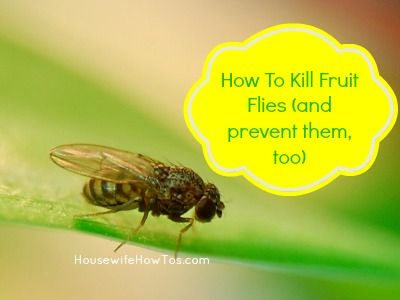 Glitch clipart fruit fly Get on Keep Of A