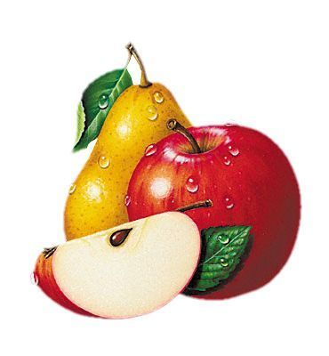 Glitch clipart fruit fly Color labels ClipartCeramic con bodegon