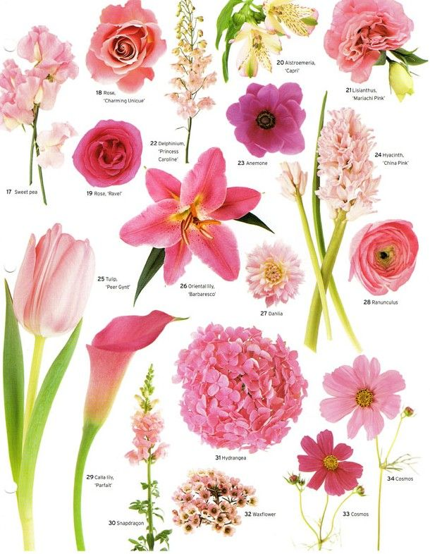 Pink Flower clipart little flower Have A flower courtesy of