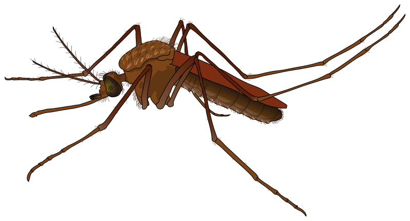 Shadows clipart mosquito Realistic 23 to Free &