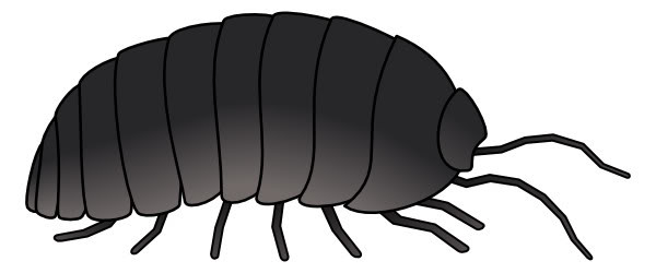 Bugs clipart roly poly  Clipart Polly Bug Rolly