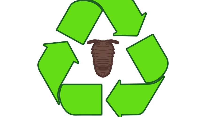 Bugs clipart roly poly Waste return dead Sciencing Roly