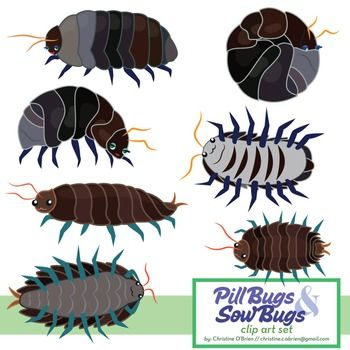 Bugs clipart roly poly About Pinterest Art Roly and