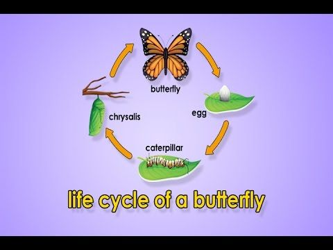 Glitch clipart spring butterfly Jack on Life ideas Metamorphosis