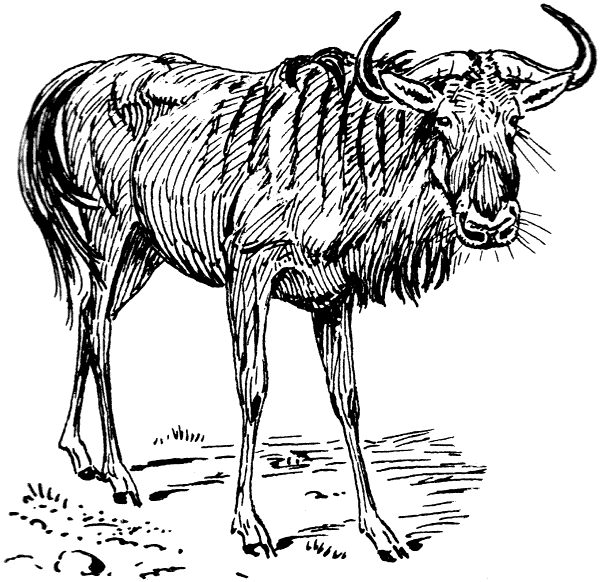 Wildebeest clipart black and white Domain Clipart Art of Clip
