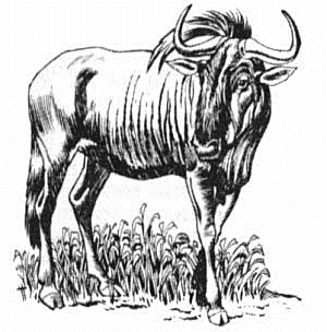Wildebeest clipart black and white Free wildebeest%20clipart%20 Panda Clipart Clipart
