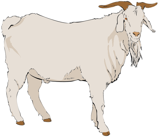 Mountain Goat clipart baby goat #9