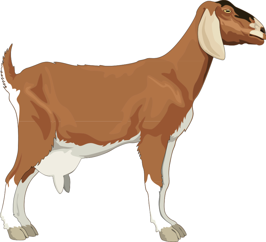 Goat clipart Clipartcow clip art  images