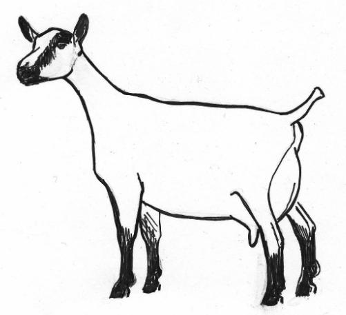 Drawn goat craft Drawings Goat FREE–  milk