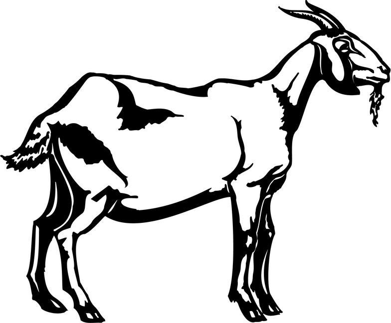 Black & White clipart goat White 2 com Goat clipart