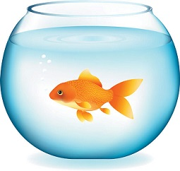 Gold Fish clipart Goldfish bowl Free Clipart in