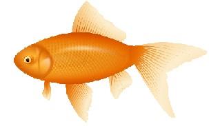 Goldfish clipart orange color Goldfish Clipart Free Goldfish