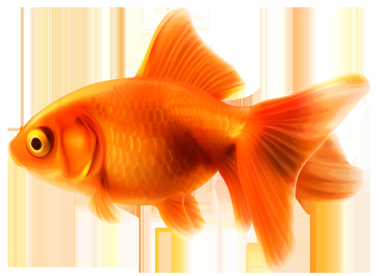 Gold Fish clipart 11 more com clipart logo