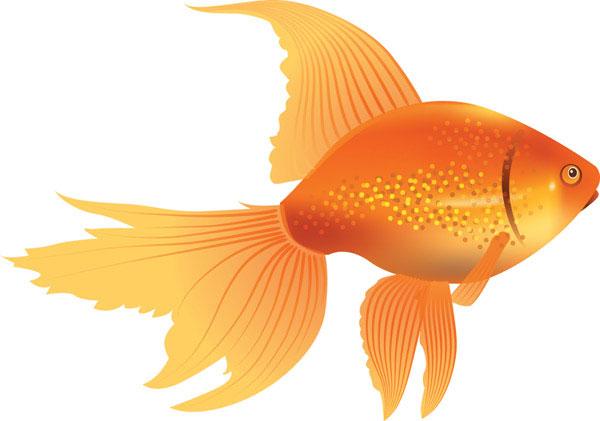 Line Art clipart golden fish Clipart Clipart Panda goldfish%20clipart%20 Goldfish