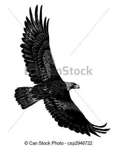 Golden Eagle clipart Clip Aquila Eagle csp2946722 Eagle