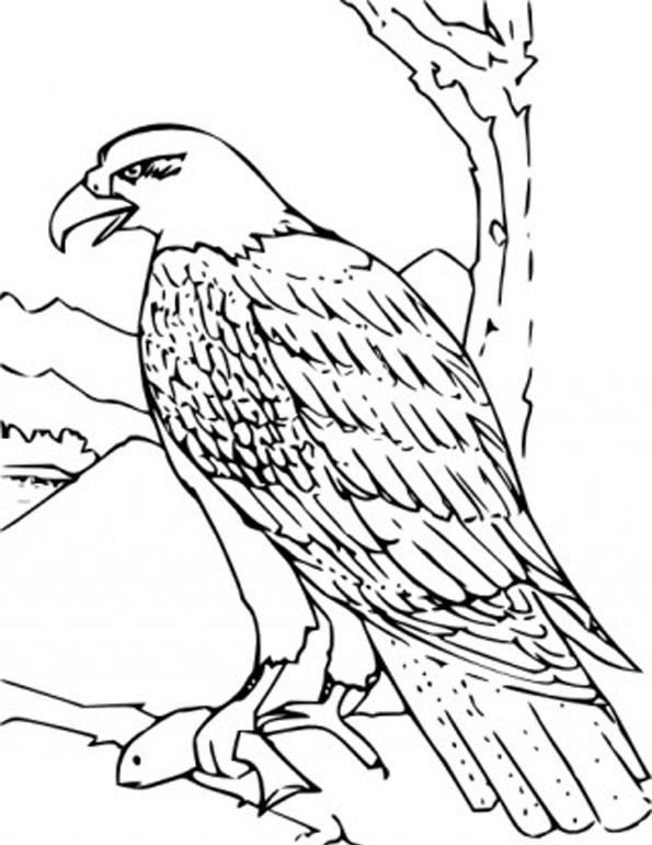 Bald Eagle clipart black and white Art Coloring golden Clip Website
